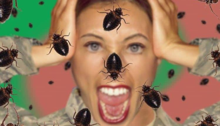Safeguard Yourself from Bed Bugs