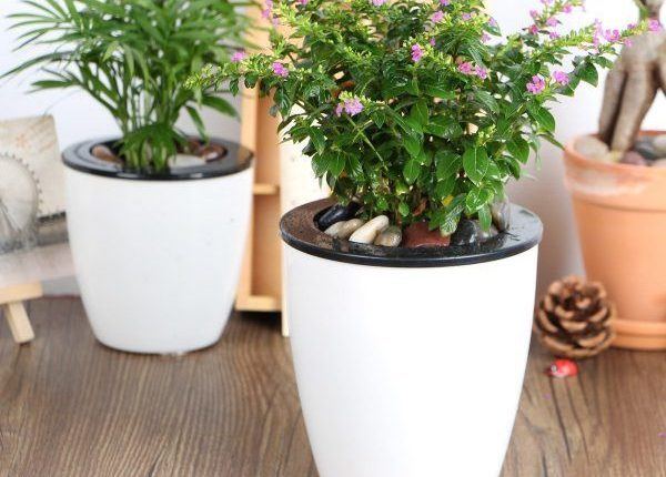 Looking For Self-Watering Planters 1
